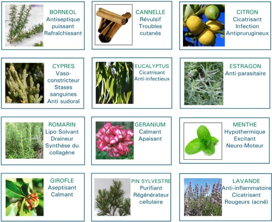 propriétés des huiles essentielles