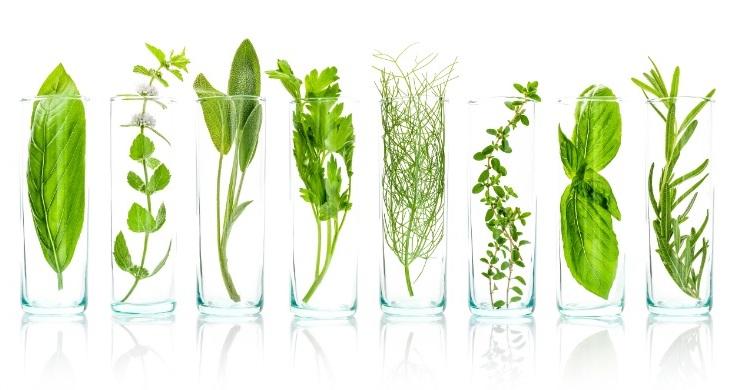 Les extraits de plantes utilisés dans les produits Géomer