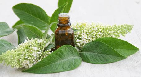 les huiles essentielles utilisées par Géomer